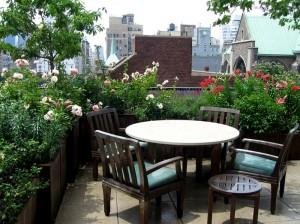 terrace-garden-plants_mini