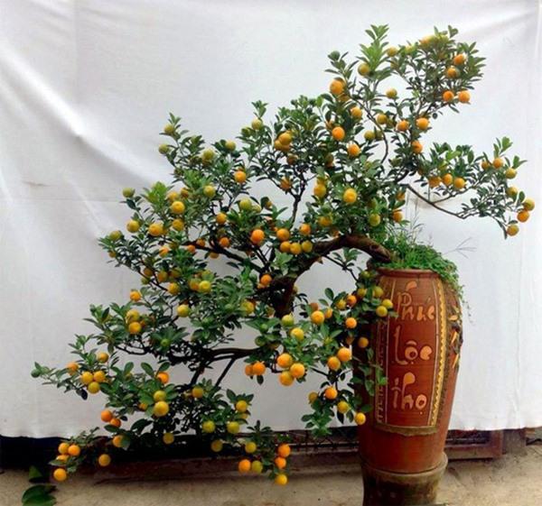chon-dung-cay-than-gac-cong-giup-xua-duoi-ta-khi-loc-vuong-quanh-nam-1-1546857275-530-width600height561